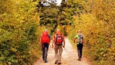 Yeni Başlayacaklara Fosil Ağaç / Cam Teras / Kapaklı Yaylası – Kızılcahamam Trekking