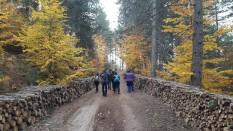 Şirinyazı Göleti Mengen Trekking